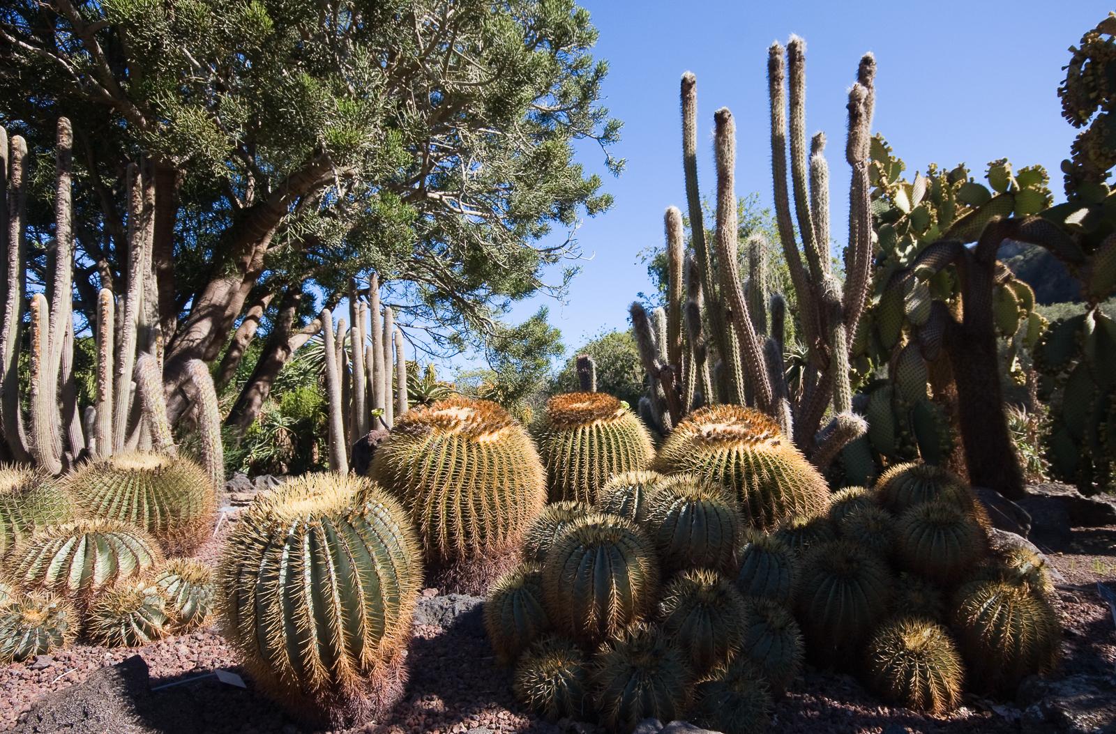 Jard n bot nico canario viera y clavijo isla de gran canaria - Jardin botanico las palmas ...